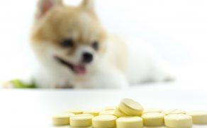 Jakie zmiany dotyczące leków dla zwierząt wprowadzi Rozporządzenie Parlamentu Europejskiego i Rady (UE) 2019/6?