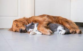 Wyciągnąć pomocną… łapę – współpraca i wzajemna pomoc u zwierząt