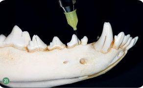 WWP_10_15_stomatologia_ZNIECZULENIE_PACJENTA_STOMATOLOGICZNEGO_RYC_21