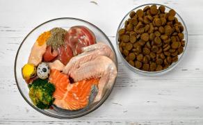 WWP_2016_6_Żywienie w cukrzycy psów
