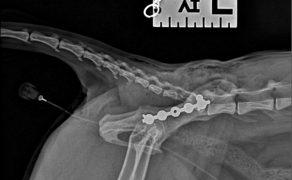 WWP_5_20_chirurgia_FLUOROSKOPIA_SRODOPERACYJNA_W_ORTOPEDII_RYC_18