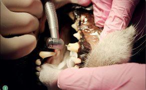 WWP_9_15_stomatologia_LECZENIE_ENDODONTYCZNE_CZ_II_RYC_2