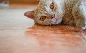 Zalecenia IVETF dotyczące rozpoznawania padaczki idiopatycznej u psów i kotów