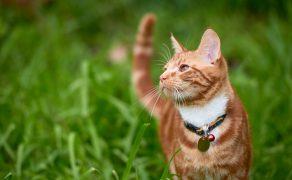 Wpływ-pre-i-probiotyków-na-wybrane-zaburzenia-żołądkowo-jelitowe-u-psów-i-kotów_