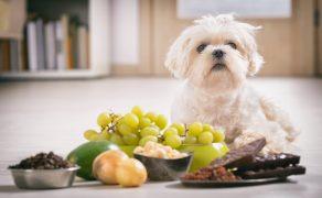 Zatrucia-zwierząt-towarzyszących-wybranymi-produktami-spożywczymi