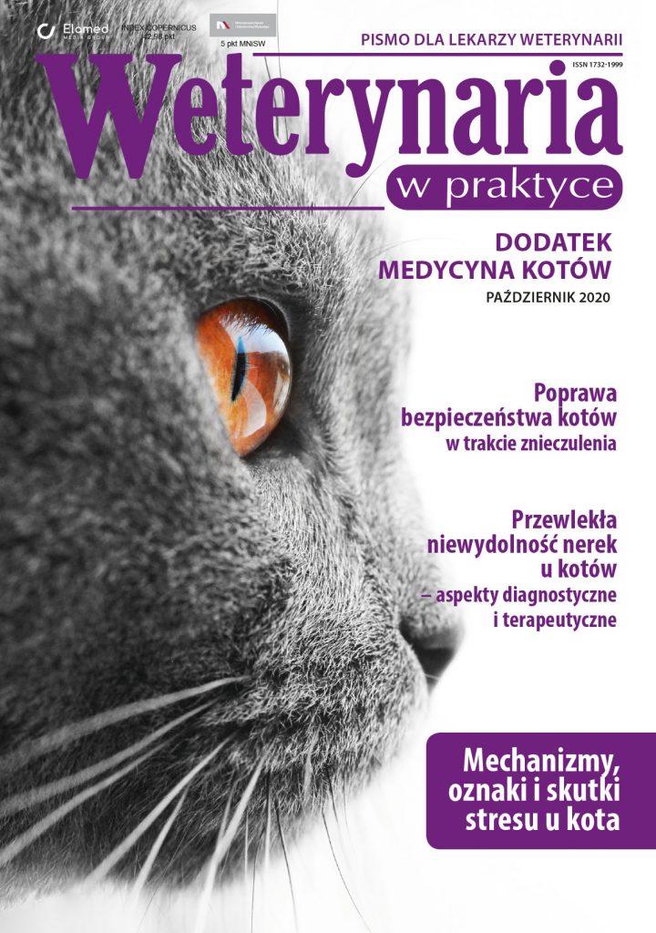 medycyna kotów