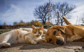 Odmienny-obraz-chorobowy-u-psów-i-kotów-w-starszym-wieku_weterynaria-w-praktyce_10_2020
