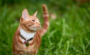 Białaczka kotów – etiologia, diagnostyka oraz najważniejsze aspekty prezentacji klinicznej